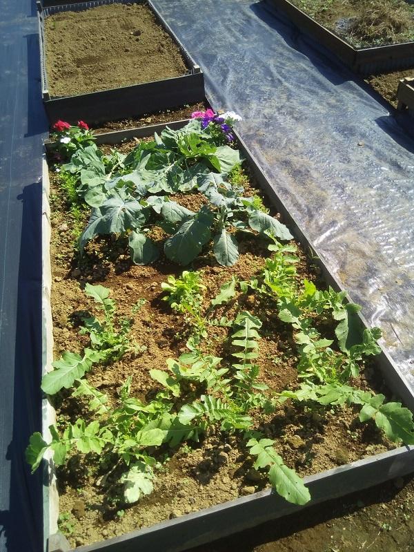 花壇型ミニ菜園で自由栽培の例
